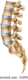 Spine - Lumbar Region - lateral view