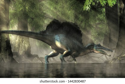 A spinosaurus in a swamp. Spinosaurus was semi-aquatic dinosaur from the Cretaceous period. It was one of the largest carnivorous dinos.  3D Rendering