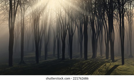 Spooky background of trees on a foggy sunny day - Shutterstock ID 221762686