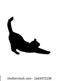 Sports cat shadow on white background