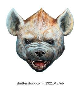 Spotted hyena portrait. Hyena roaring illustration.