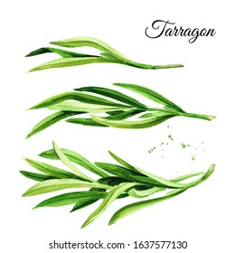 Sprig of fresh green tarragon set. Hand drawn watercolor illustration, isolated on white background