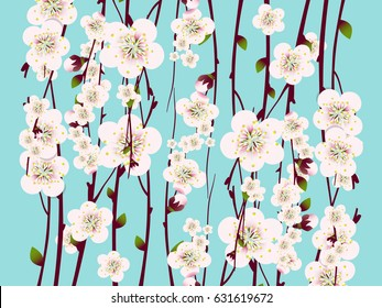 Spring  apricot blossoming branch on bright background