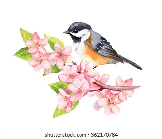 Spring bird on blossom branch with pink cherry flowers. Watercolor