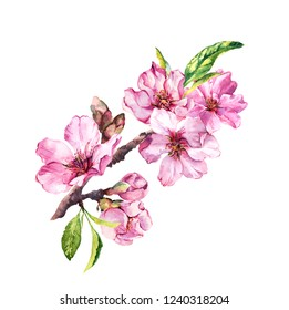 Spring blossom flowers, flowering pink sakura, cherry in springtime. Watercolor floral branch