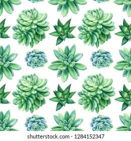 spring bouquet, seamless pattern from succulents an isolated white background, watercolor illustration, botanical painting, Echeveria, Haworthia