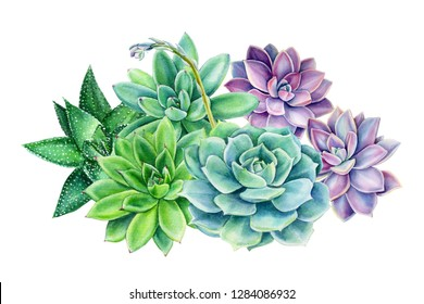 spring bouquet of succulents on an isolated white background, watercolor illustration, botanical painting