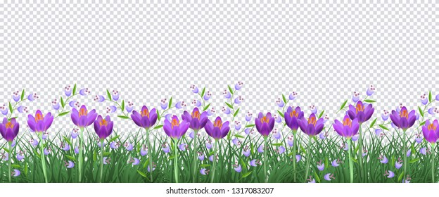 Spring floral border with bright purple crocuses and little blue wild flowers on fresh green grass on background - decorative frame with blooms and greenery in illustration.