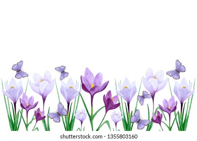 Spring flowers border. Hand drawn watercolor illustration. Background with crocuses and butterflies. Frame on a white background with place for text.