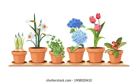 Spring flowers. Floral decorative interior elements. Isolated tulips in pot, houseplant on shelf illustration