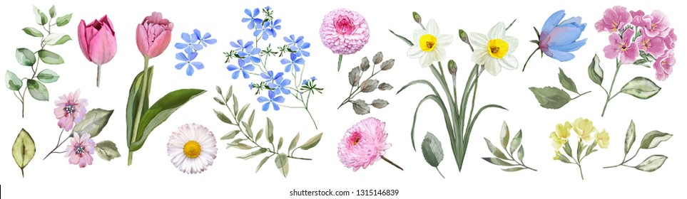 Spring flowers. Watercolor. Set: tulips, primroses, daffodils,forget-me-nots, daisies, leaves, flowers, buds.