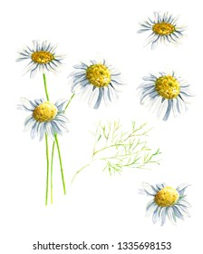 Spring hand drawn watercolor camomile daisy and mimosa elements set isolated