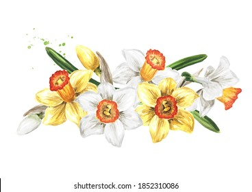 Spring Narcissus flowers, Hand drawn watercolor illustration  isolated on white background.tif