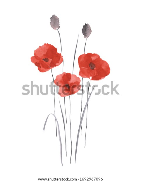 Spring red flowers of poppies on a white background. Isolated. Watercolor -1
