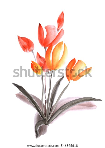Spring tulips with orange and red flowers on a white background. Isolated. Watercolor