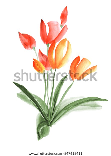 Spring tulips with orange and red flowers on a white background. Isolated. Watercolor -1