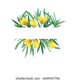 Spring yellow crocus flowers and green leaves border isolated on white background. Hand drawn watercolor illustration.