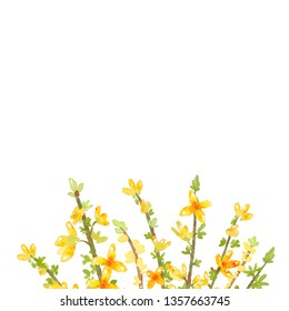 Spring yellow flower forsythia illustration / Design greeting cards, invitations, wedding cards, banner images./ Parents day