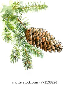 Spruce branch with cone on white background, watercolor sketch