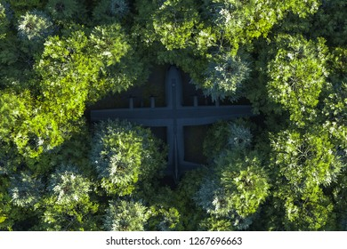 Spruce forest from the birds eye view with a c130 - Forest drone aerial - 3D Illustration