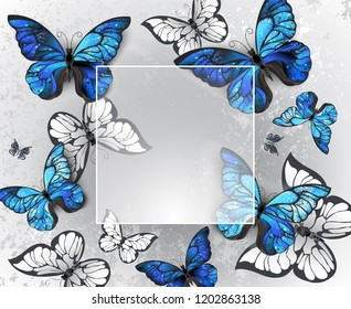 Square  banner on gray background with volumetric, realistic blue and white butterflies.