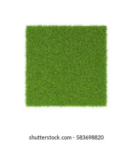 Square of Fescue Grass field over white. Top view. 3D illustration