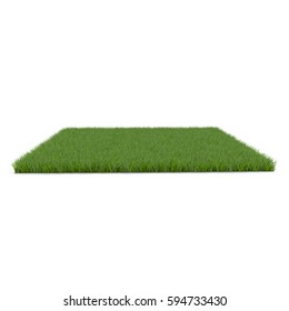 Square of Fescue Grass field over white. 3D illustration