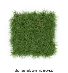 Square of Ryegrass Grass field over white. Top view. 3D illustration