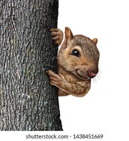 Barking Squirrel Images, Stock Photos & Vectors | Shutterstock