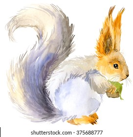 Squirrel. Forest animal watercolor illustration