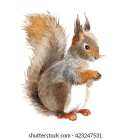 Squirrel isolated on a white background, watercolor