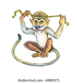 Squirrel monkeys, Saimiri, Death's head.