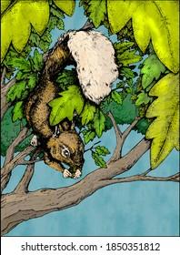 A squirrel in oak tree