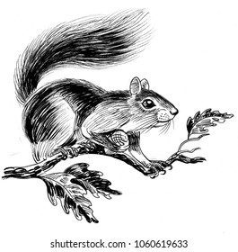 Squirrel on the oak tree. Ink black and white illustration