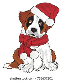 st. bernard in christmas scarf and hat sit