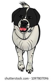 st bernard dog stock illustrations images vectors shutterstock