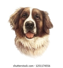 The St. Bernard dog isolated on white background. Powerful Dog Breeds. Realistic Portrait of Moscow Watchdog. Animal art collection. Hand drawn pet illustration. Good for T-shirt, pillow, pet shop