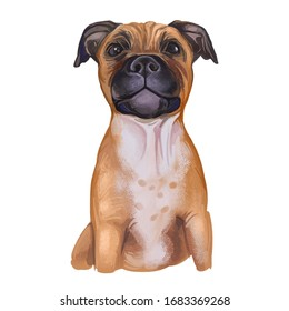 Staffordshire Bull Terrier digital art illustration of cute canine animal of tan color. Muscular dog breed, British short-haired terrier of medium size. Cross-breeding Bulldog, English white terrier