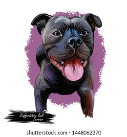 Staffordshire Bull Terrier Staffie, breed of short-haired, small to medium sized. Digital art. Animal watercolor portrait closeup isolated muzzle of pet, canine hand drawn clipart, animalistic drawing