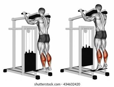 Standing Calf Raises. 3D illustration