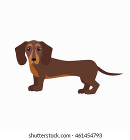Standing cute dachshund  in flat style. Dog colorful silhouette isolated on white background