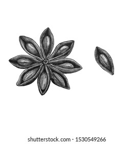 star anise drawn realistic. Pencil graphics. Anise is ordinary. Black and white illustration