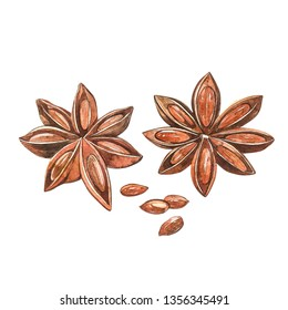Star anise plants isolated on white background. Watercolor botanical illustration of culinary and healing plant star anise.