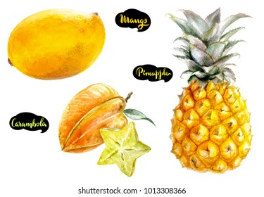 Star fruit carambola, mango, pineapple  set watercolor hand-drawn illustration isolated on white background.