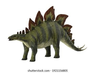 Stegosaurus 3D illustration on white background