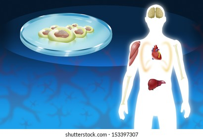 Stem cell therapy and Organ Donor concept. Body parts illustration.