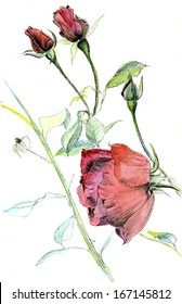 stem red rose with buds
