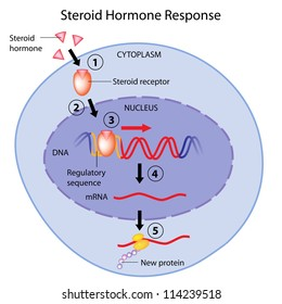 What is a steroid hormones action methyl testosterone steroid