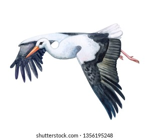 Stork bird in flight. Flying stork  isolated on white background. Illustration. Watercolor. Template. Hand drawing. Clipart. Close-up. Hand painted