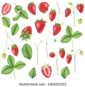 63d8058fc Strawberry clipart, watercolor painting. Strawberry wreath, watercolor  painting. For design cards,